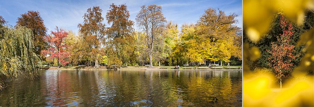 2 photographies de paysage d'automne dans un parc arboré